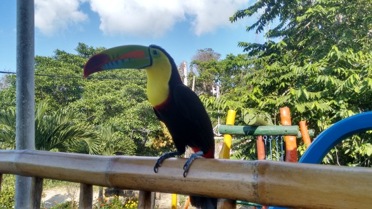 tucan colombia